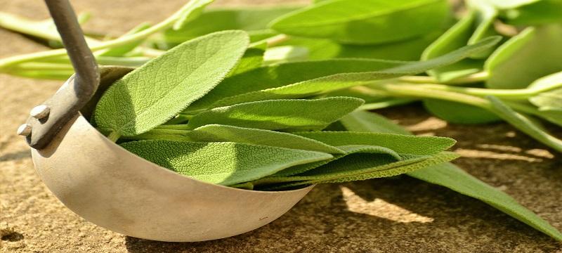 čaj od žalfije protiv znojenja